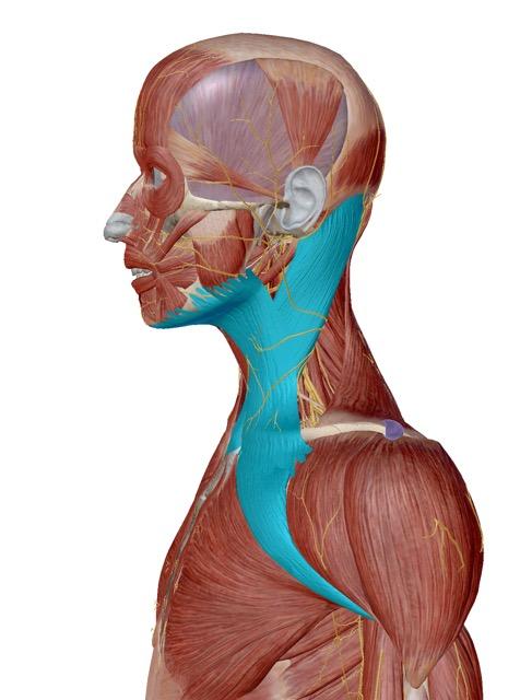メニエルの症状(首こり、肩こり、片頭痛、突発性難聴、めまい、歯の食いしばり)のお悩みが解消したと喜びの声